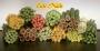 Freche Früchte | Stangen - Canes Fimo