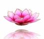 Kerzenhalter Windlicht | Lotus Capiz rosa / pink BLUME Goldrand